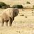 afrika · fil · toz · çamur · kapalı · park - stok fotoğraf © markdescande