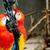 papagájok · kötél · égbolt · narancs · kék · toll - stock fotó © markdescande