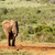 bokor · elefánt · élvezi · víz · locsol · lyuk - stock fotó © markdescande