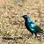 fényes · madár · citromsárga · szem · áll · bámul - stock fotó © markdescande