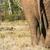 Bush · éléphant · permanent · domaine · forêt - photo stock © markdescande