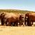 afrikai · elefánt · család · összejövetel · locsol · lyuk · erdő - stock fotó © markdescande