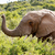 elefánt · összes · bokrok · felfelé · levegő · erdő - stock fotó © markdescande