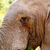 elefánt · eszik · levél · néz · erdő · természet - stock fotó © markdescande