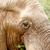 Bush · słoń · jedzenie · pole · trawy · lasu - zdjęcia stock © markdescande