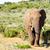 afrikai · bokor · elefánt · lefelé · domb · tele - stock fotó © markdescande