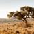 struzzo · altro · animali · savana · africa · natura - foto d'archivio © markdescande