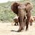 afrikai · elefánt · áll · magas · hosszú · feladat · fülek - stock fotó © markdescande