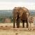 Bush · éléphant · sur · zèbre · trou - photo stock © markdescande