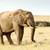 trun up and lets walk   the african bush elephant stock photo © markdescande