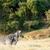 kettő · zebra · szeretet · egyéb · mező · égbolt - stock fotó © markdescande