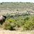 elefánt · sétál · szavanna · egy · afrikai · elefánt · utazás - stock fotó © markdescande