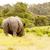 orrszarvú · eszik · fű · kilátás · fűmező · baba - stock fotó © markdescande