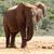 bokor · elefánt · fülek · lábak · áll · lábak · keresztbe - stock fotó © markdescande