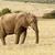 elefánt · áll · gondolkodik · pillanat · nyitva · citromsárga - stock fotó © markdescande