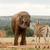 bokor · elefánt · fúj · víz · zebra · locsol - stock fotó © markdescande