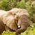 旅行 · アフリカ · アフリカ · 大陸 · 風景 · 動物 - ストックフォト © markdescande