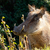 warthog popping out of the grass to say hi stock photo © markdescande