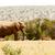 africaine · Bush · éléphant · ensoleillée · savane · paysages - photo stock © markdescande
