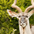 ritratto · maschio · parco · Namibia · meridionale · africa - foto d'archivio © markdescande