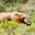 bokor · elefánt · áll · eszik · fűmező · erdő - stock fotó © markdescande