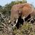 widok · z · boku · Bush · słoń · stałego · za - zdjęcia stock © markdescande