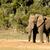 afrikai · bokor · elefánt · madarak · locsol · lyuk - stock fotó © markdescande