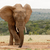 Bush · éléphant · permanent · forêt · nature - photo stock © markdescande