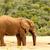 iszik · elefántok · park · Dél-Afrika · állatok - stock fotó © markdescande