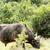 еды · трава · парка · ЮАР · природы · путешествия - Сток-фото © markdescande