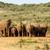 női · baba · elefántok · gyűlés · locsol · lyuk - stock fotó © markdescande