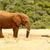 bokor · elefánt · ivóvíz · nyitott · szájjal · erdő · természet - stock fotó © markdescande
