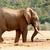 bokor · elefánt · felfelé · víz · utolsó · bit - stock fotó © markdescande