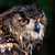 foto · primo · piano · ritratto · gufo · reale · verde · uccello - foto d'archivio © maros_b