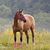 quarter horse stock photo © maros_b