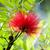 rojo · flor · hojas · verdes · cielo · árbol · primavera - foto stock © maros_b
