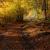Autumn still life stock photo © maros_b