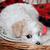jonge · puppy · bizon · mand · naar · baby - stockfoto © maros_b