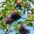 フルーツ · 葉 · 食品 · 健康 · 白 · ベリー - ストックフォト © martin33