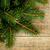 fir tree on rustic wooden board stock photo © marylooo