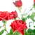 красную · розу · капли · воды · фото · лист · роз - Сток-фото © marylooo