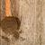 feketebors · szegfűszeg · fából · készült · kanalak · rusztikus · konyha - stock fotó © marylooo