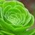 etli · ağaç · doğa · yaprak · yeşil · güzel - stok fotoğraf © marylooo