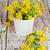 fiori · di · campo · secchio · selvatico · viola · fiori · isolato - foto d'archivio © marylooo