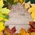 żółty · stare · drewno · mokro · ciemne · drewna - zdjęcia stock © marylooo