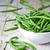 зеленый · строку · бобов · большой · Фермеры - Сток-фото © marylooo