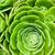 succulent plant stock photo © marylooo