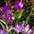 красивой · Blossom · трава · саду · группа - Сток-фото © marylooo