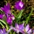 фиолетовый · цветок · цвести · саду · складе · фото - Сток-фото © marylooo
