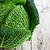 капуста · белый · саду · зеленый · листьев - Сток-фото © marylooo
